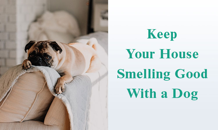 how to keep your house smelling good with a dog